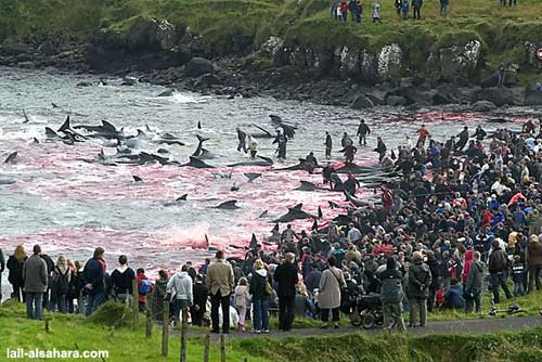 Crowd watching whales
